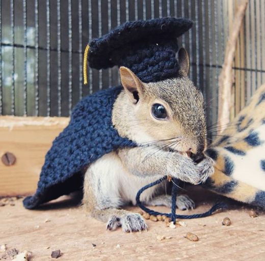 Squirrel Graduation