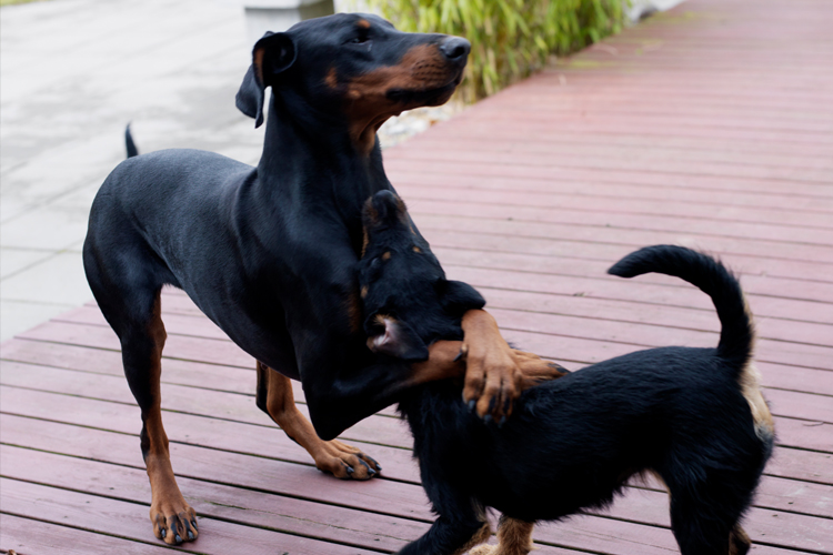pup petting pup