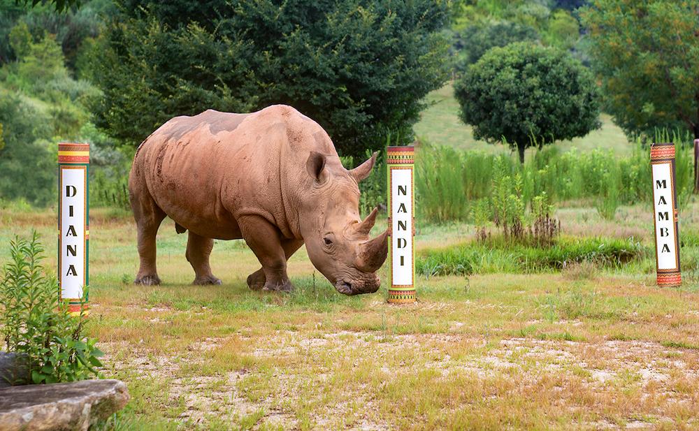 stormy rhino