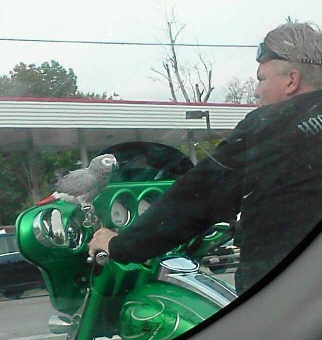 Rosie the Parrot Motorcycle