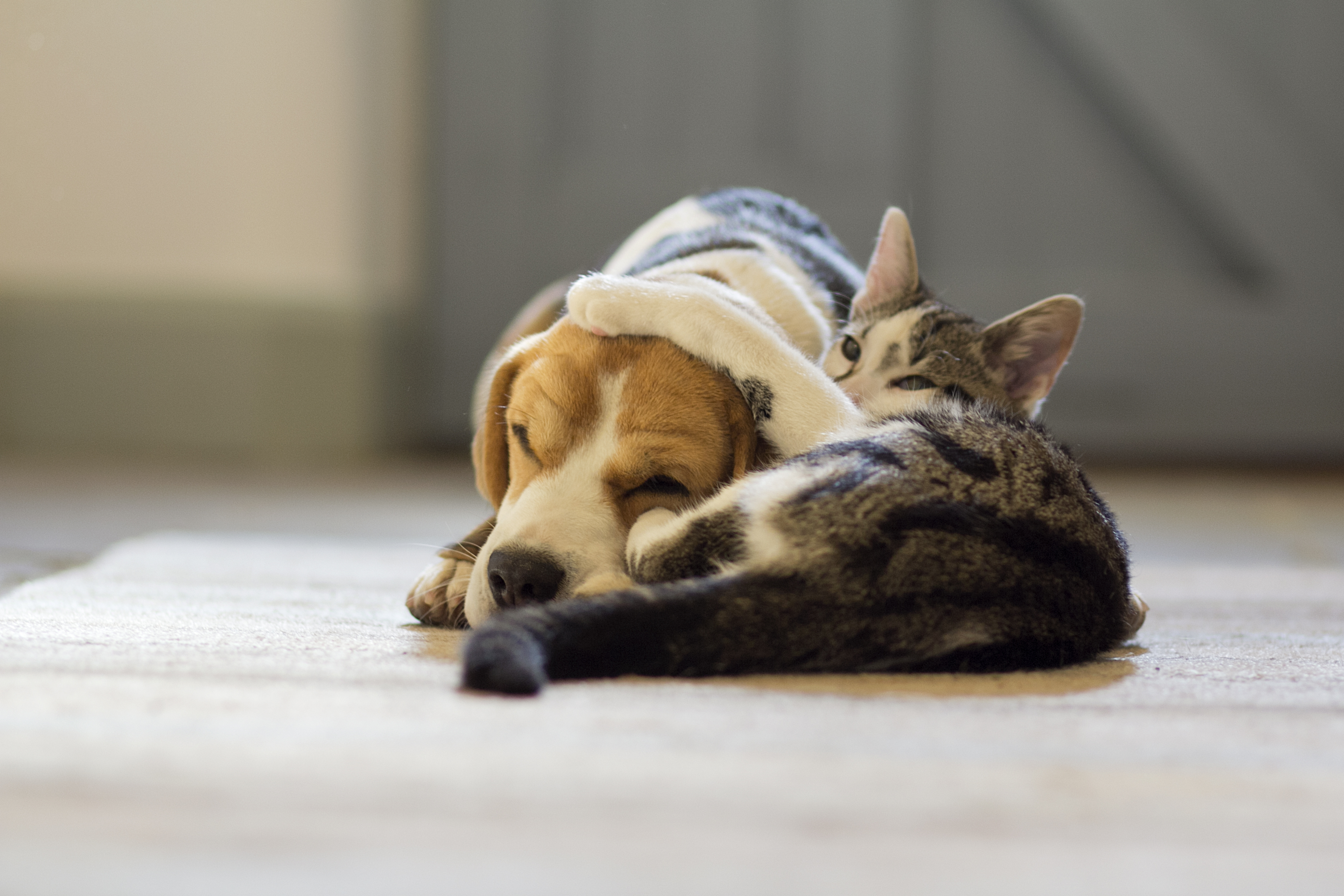 why do dogs and cats not get along