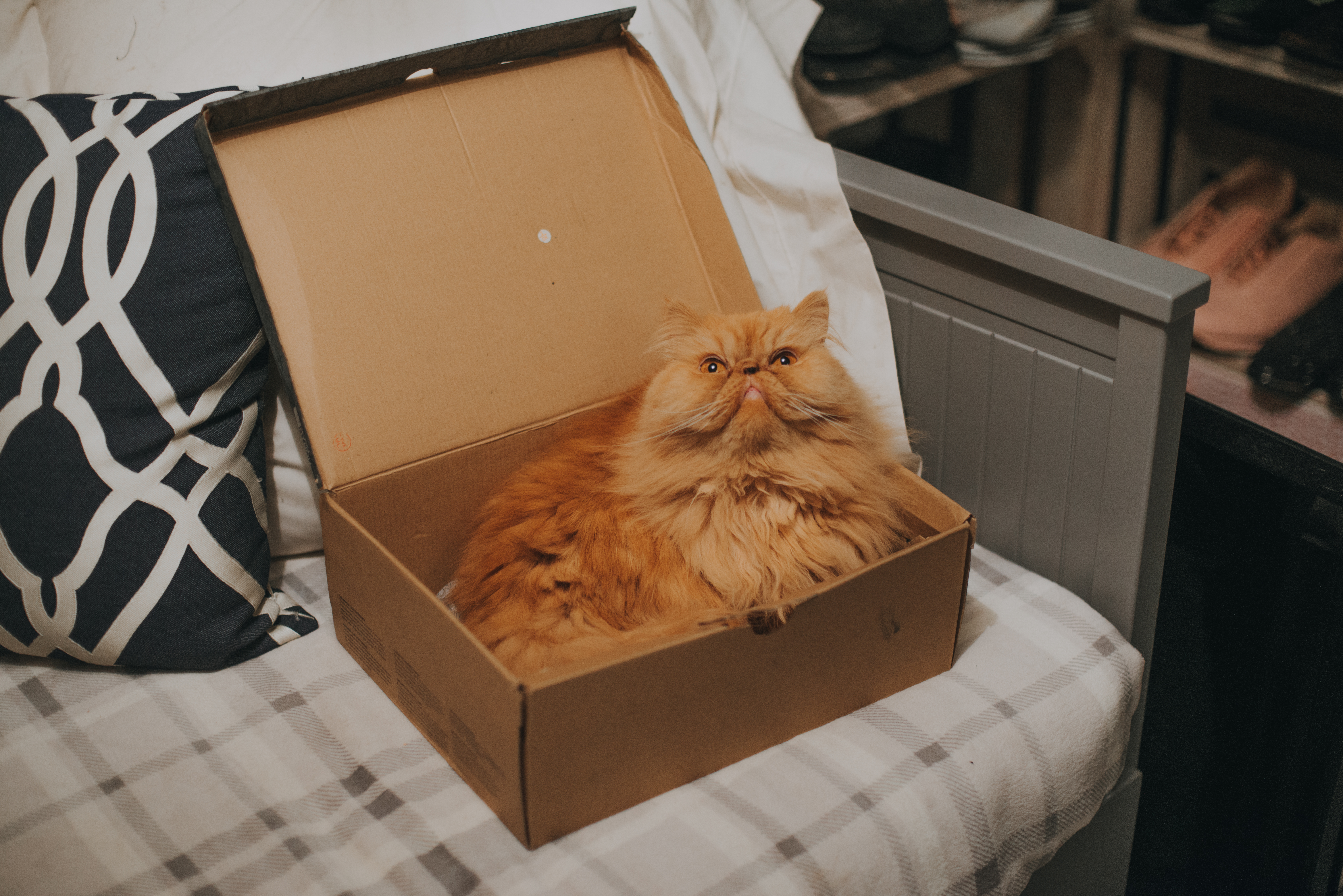 Orange cat sitting in cardboard box.