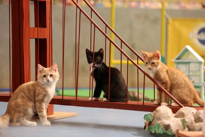 Kitty halftime show at the 2018 Puppy Bowl.