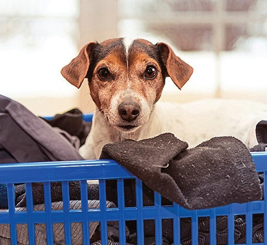 pet fur in laundry