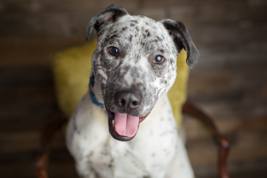 Dog with spotted face posing for camera