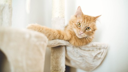cat lounging on scratching post