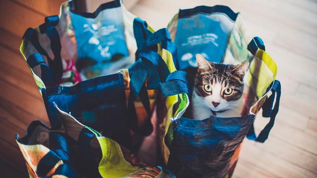 Cat sitting inside reusable grocery bag