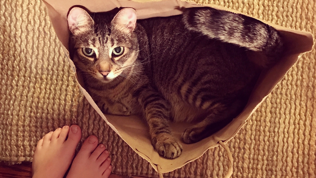 Tabby cat with round years looking up out of paper bag