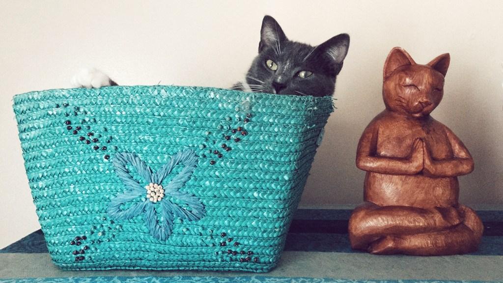 Cat inside turquoise straw bag