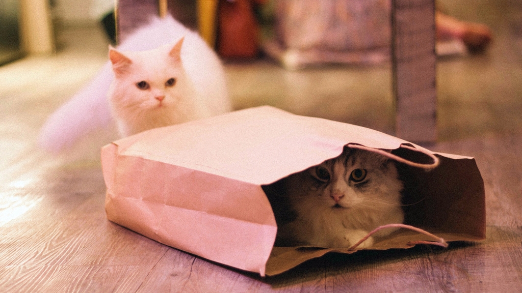 White cat looking another cat inside a paper bag