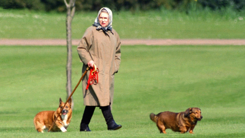 Queen Elizabeth walking with two corgis