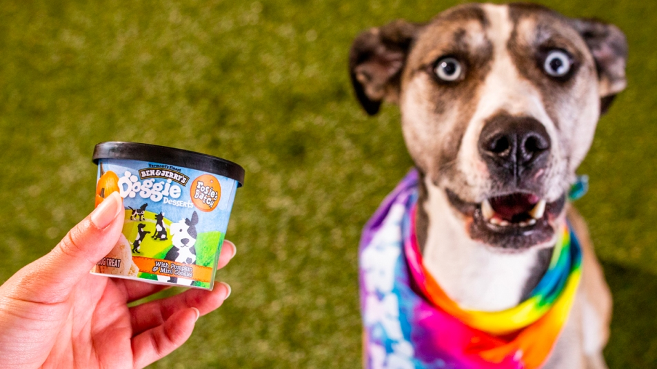 Hand holding Ben & Jerry's dog ice cream with dog next to it