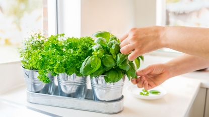 Fresh herbs synd image