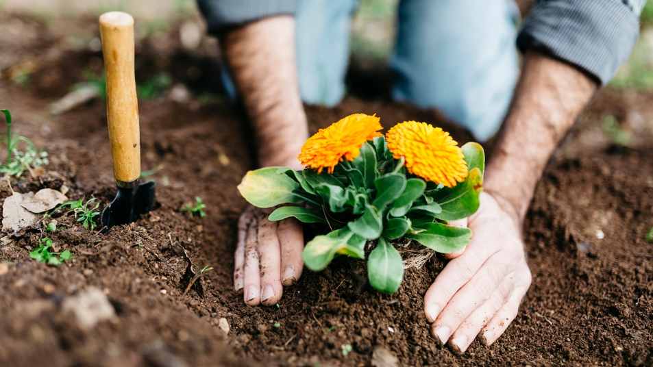 man gardening and planting flowers