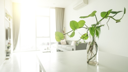 spacious living room with plant