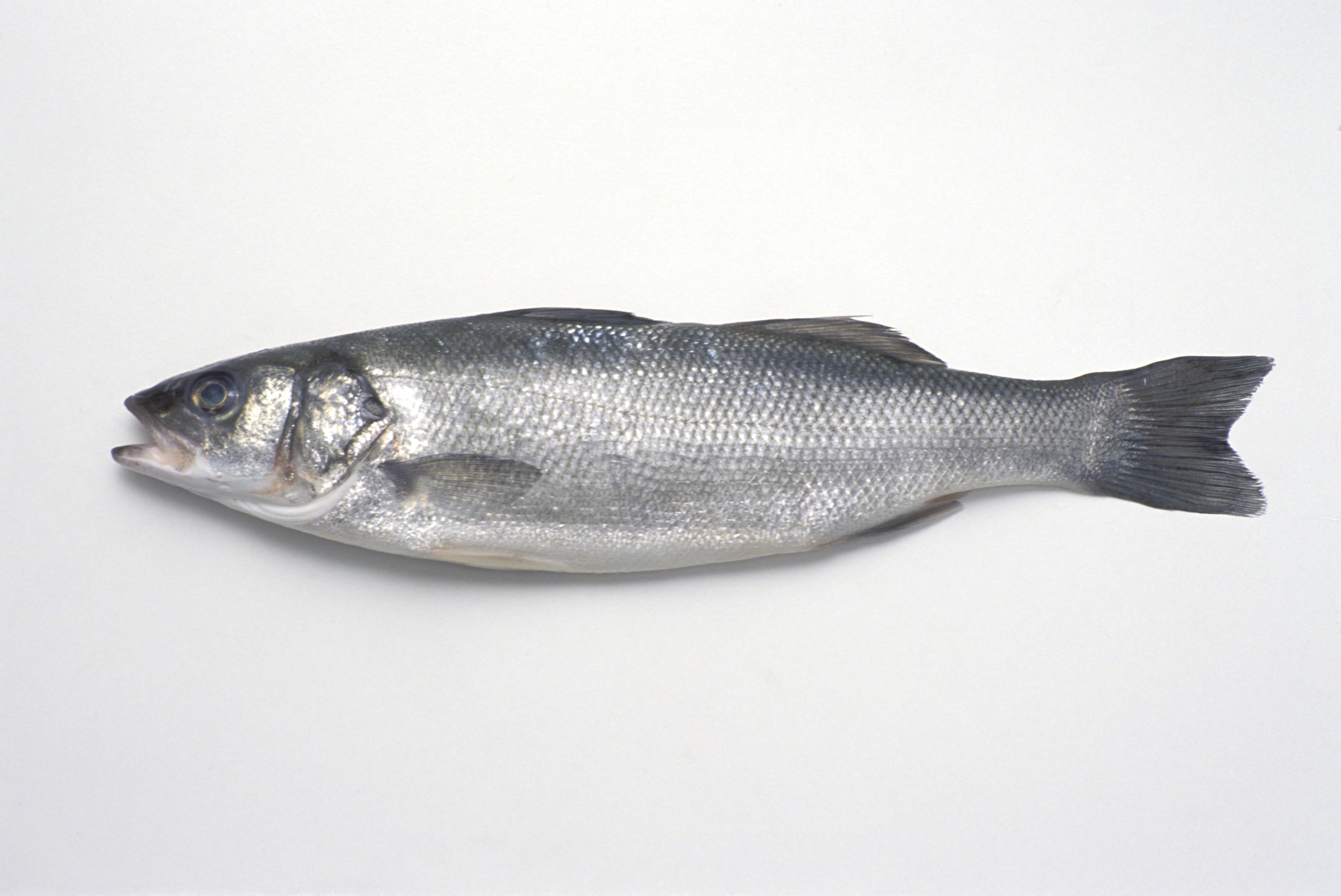 fish getty