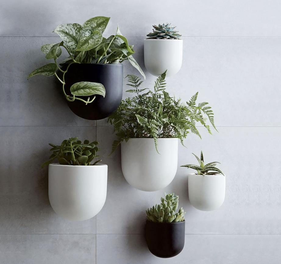 plants bathroom update