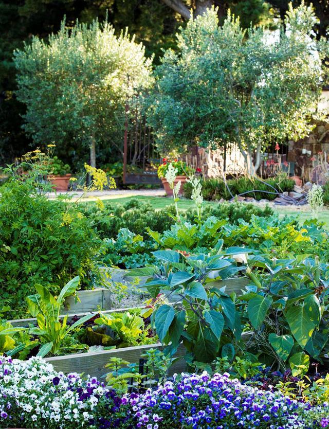 organize garden htl