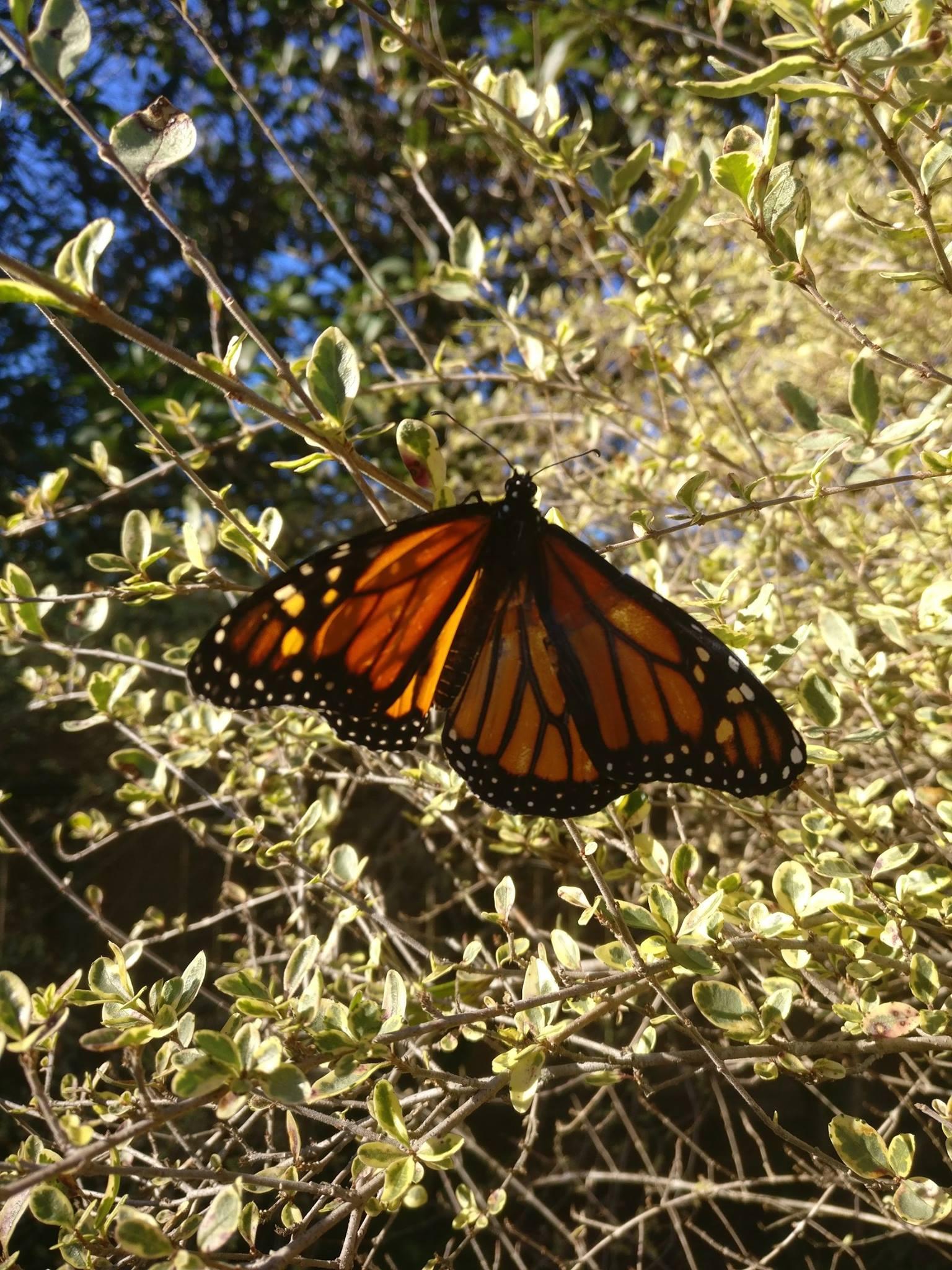 butterfly outside