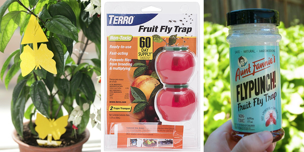 how to get rid of fruit flies buy traps