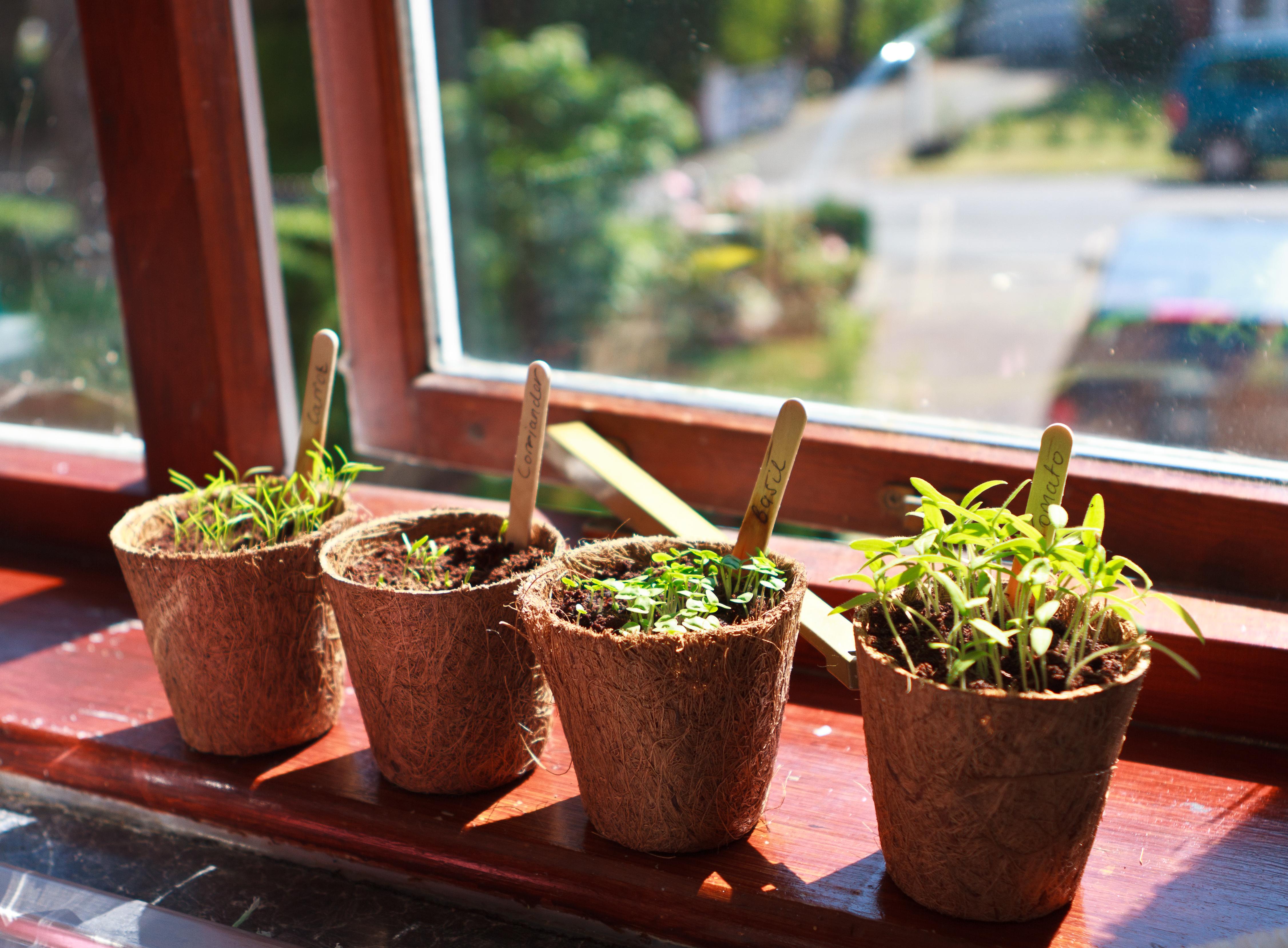Indoor Herb Garden Getty Images