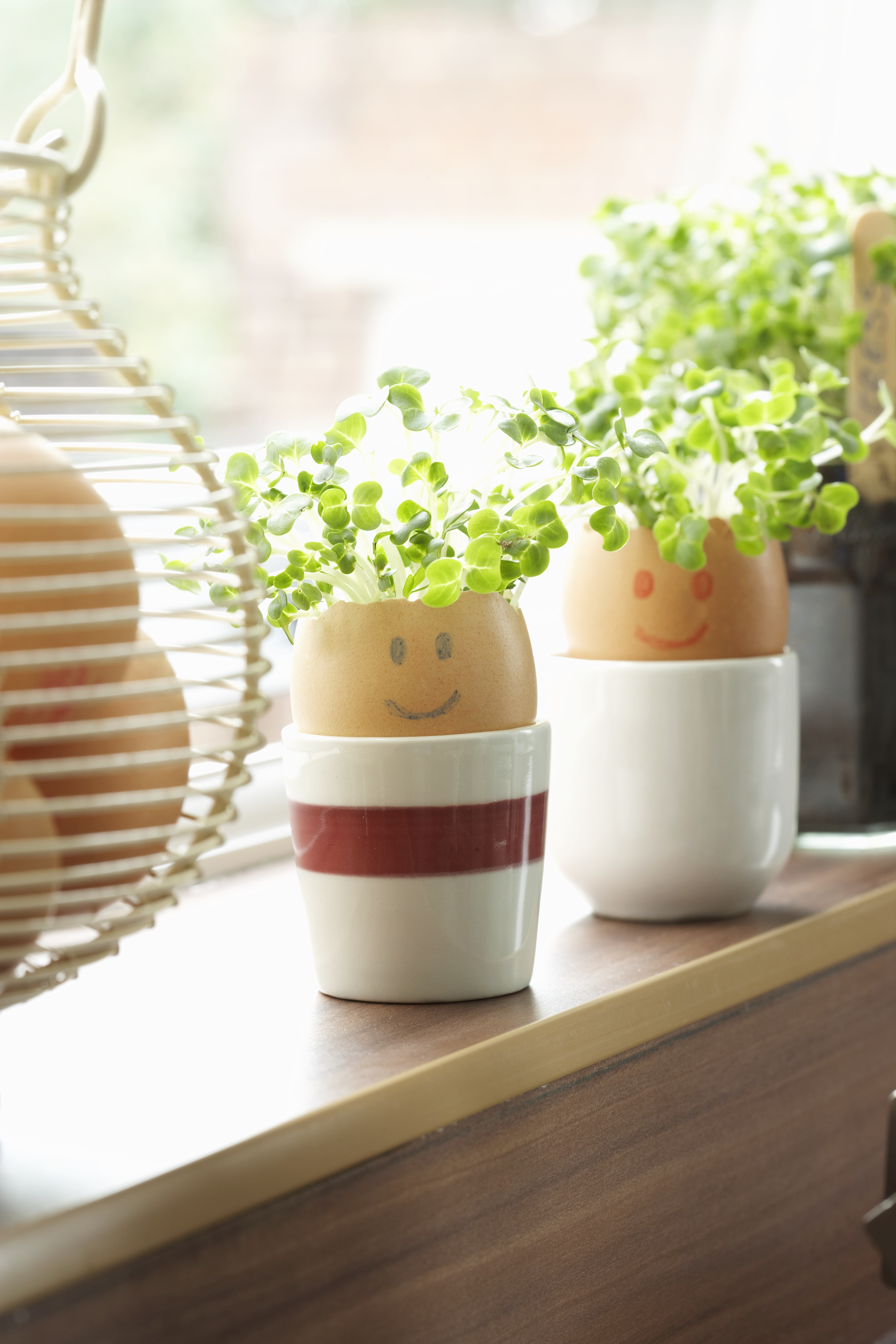 Potted Indoor Herbs Getty Images