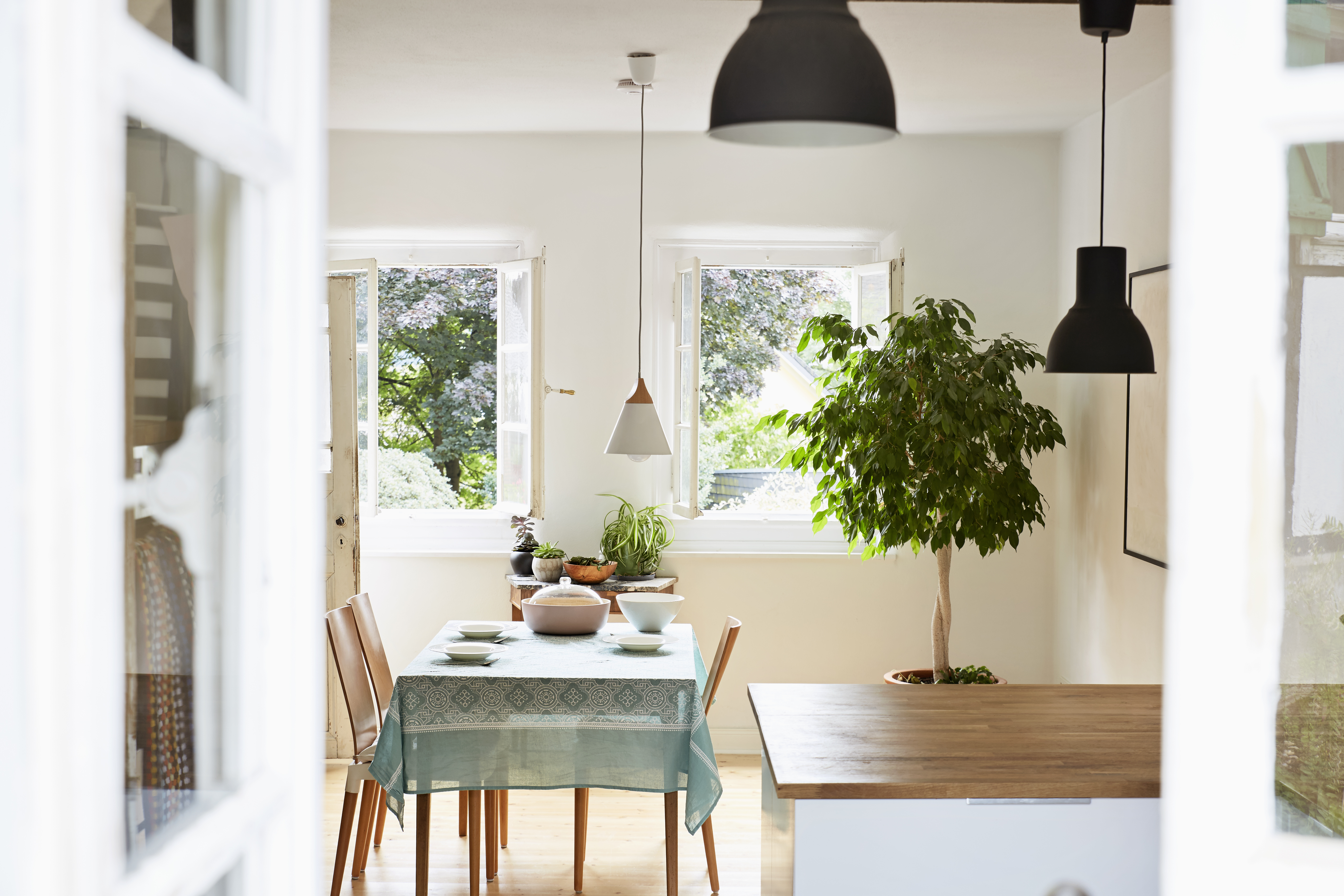 Cleaning Indoor Plants Dining Getty Images