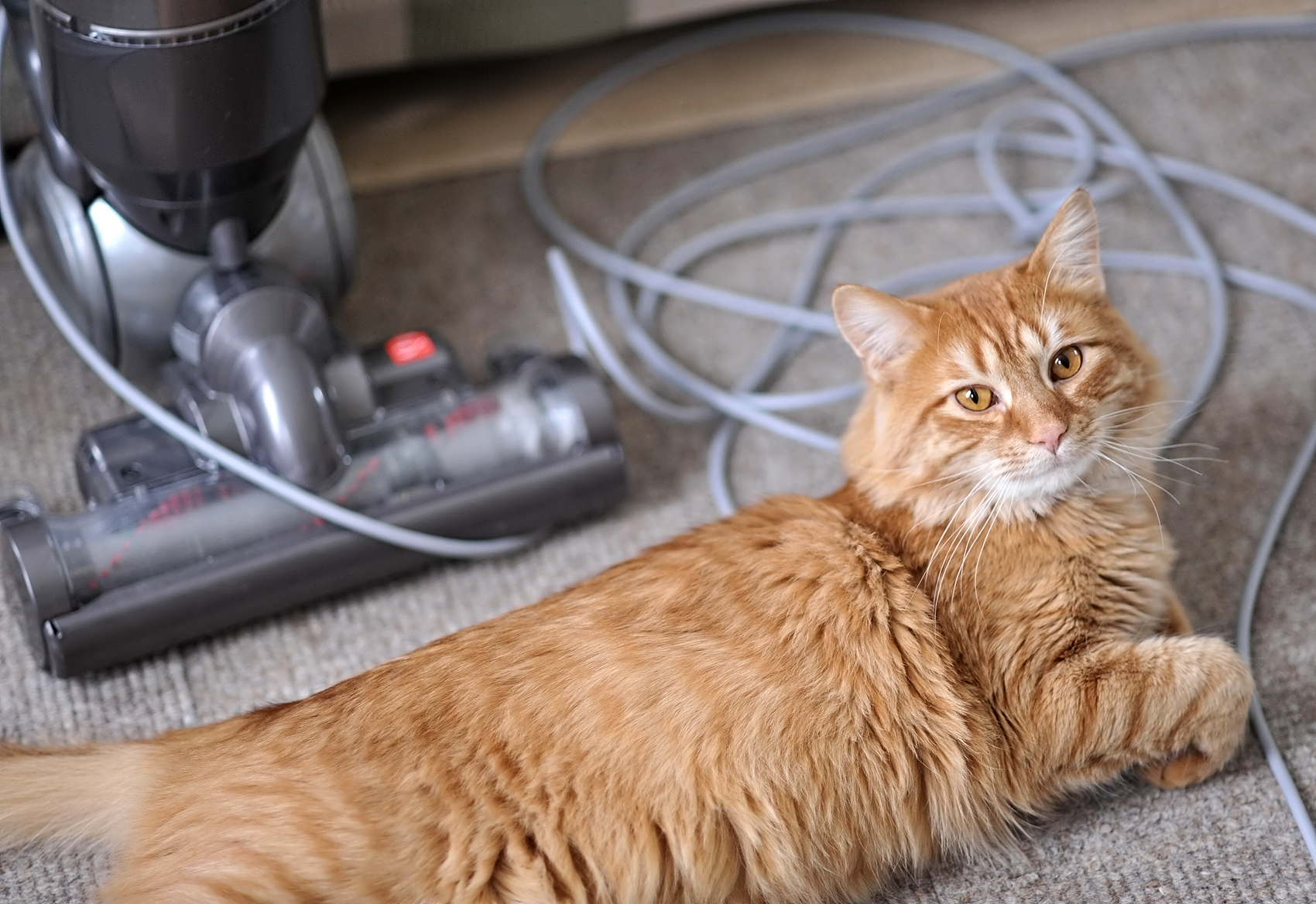 If your carpet is covered in cat hair, you need to know this squeegee trick for removing pet hair.