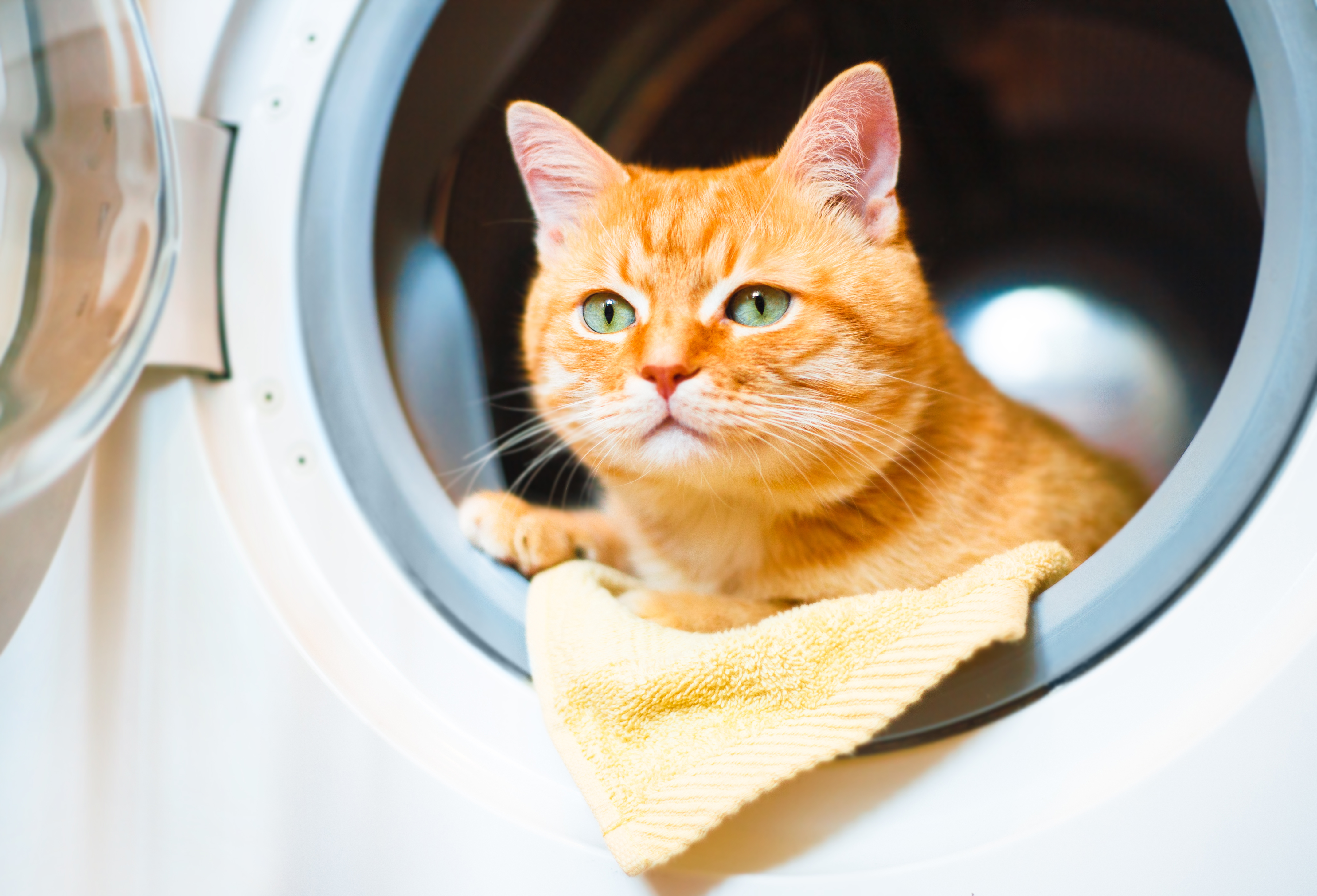 Getting pet hair out of bedding is annoying — but it doesn't have to be. A quick tumble in the laundry machine plus one secret ingredient will prevent pet fur from sticking everywhere.