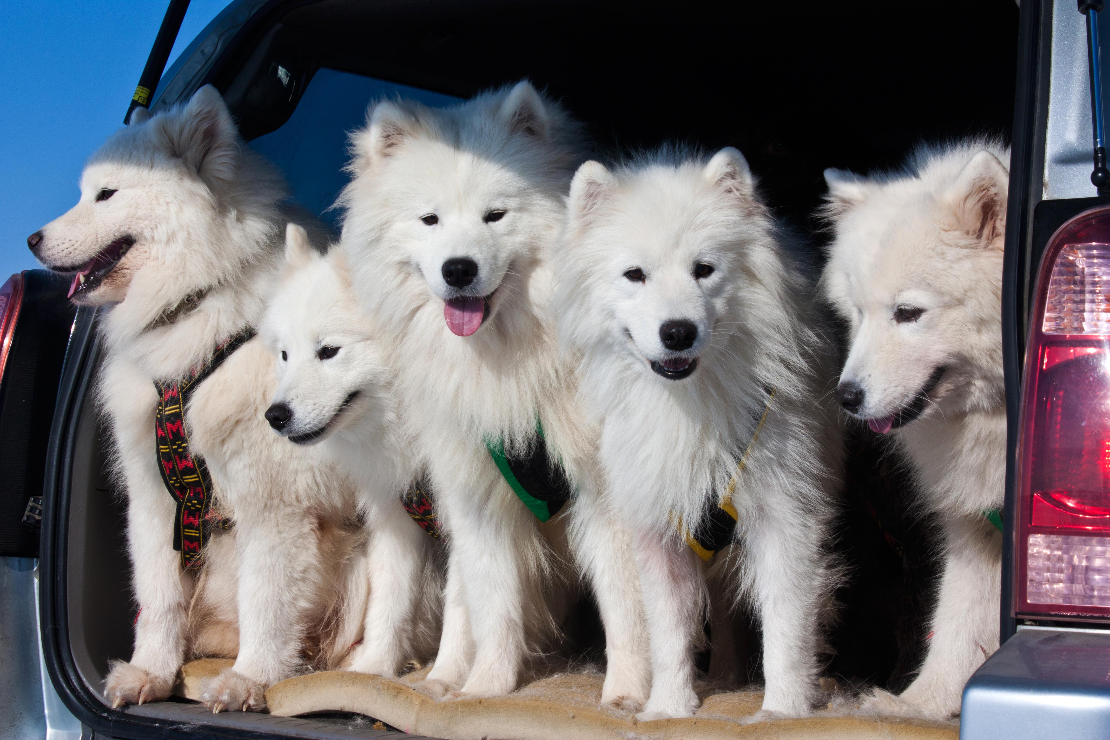 After a drip to the dog park, it's inevitable that the car is covered in fur — but it doesn't have to be that way.