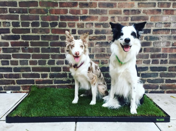dog grass patches